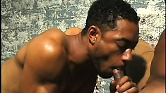 In the basement, two black studs satisfy each other's needs and urges
